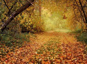 autunno stagione pensieri