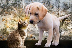 cardiofrequenzimetro: come cane e gatto